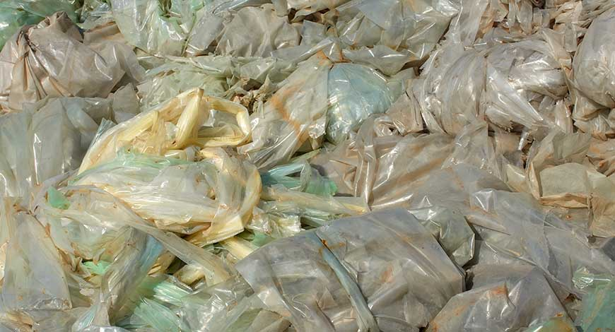 Is It End of the Days for Plastic Menace- Scientists Found Fungus Which Eats Plastic?